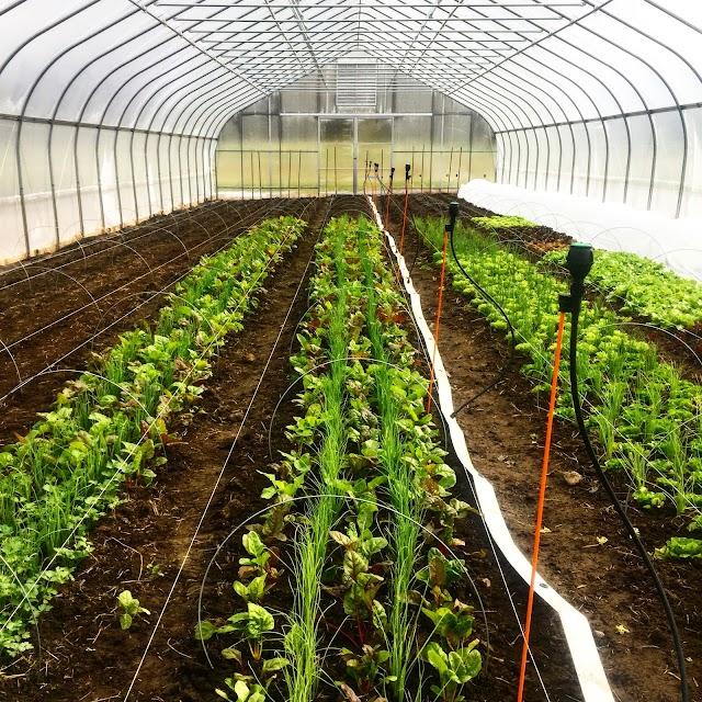Chestnut Hill Farm Farmstand and CSA