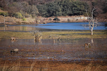 Ranthambore Tiger Reserve, Ranthambore National Park, India