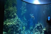 SEA LIFE London Aquarium, London, United Kingdom