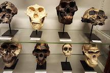 National Museum of Ireland - Natural History, Dublin, Ireland