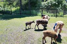 Leavenworth Reindeer Farm, Leavenworth, United States