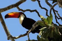 Wildlife Pantanal Tours, Cuiaba, Brazil