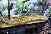 Wolf Lake State Fish Hatchery, Mattawan, United States