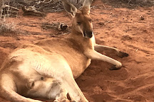 The Kangaroo Sanctuary, Alice Springs, Australia