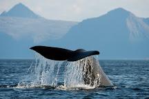 Sea Safari Andenes, Andenes, Norway