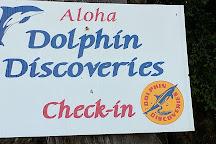 Dolphin Discoveries, Kailua-Kona, United States
