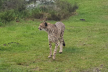 Tenikwa Wildlife Awareness Centre, The Crags, South Africa