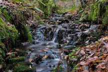 Balloch Castle Country Park, Balloch, United Kingdom
