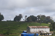 Pattumalay tea factory, Thekkady, India