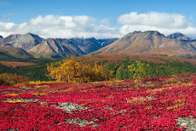 Denali Photo Guides, Denali National Park and Preserve, United States