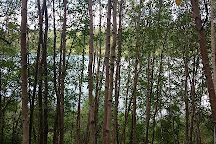 Chicakoo Lake Recreation Area, Onoway, Canada