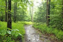 Daniel Ridge Falls, Pisgah Forest, United States