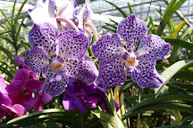 Orchid and Butterfly Farm, Mae Rim, Thailand