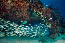 Beyond Diving, Playa del Carmen, Mexico