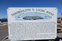 Thrombolites Walking Trail, Flower's Cove, Canada