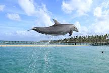 Dolphin Explorer, Punta Cana, Dominican Republic