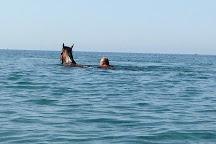 Laganas Horse Riding Center, Zakynthos, Greece