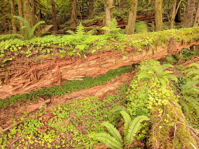 Clatsop State Forest