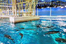 Dubai Aquarium & Underwater Zoo, Dubai, United Arab Emirates