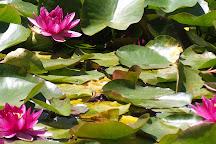 RAPAURA Watergardens, Thames, New Zealand