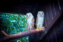 Greenacres Animal Park, Deeside, United Kingdom