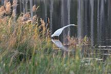 Blackwater National Wildlife Refuge, Cambridge, United States