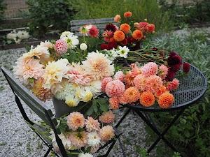 West Lane Flowers
