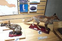 Gunma Natural Museum, Tomioka, Japan