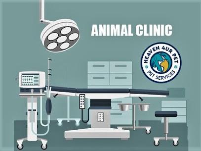 Veterinary surgery procedures