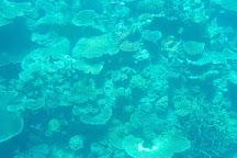 Agincourt Reef, Port Douglas, Australia