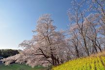 Yokohama Negishi Forest Park, Yokohama, Japan
