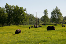 Musk Ox Farm, Palmer, United States