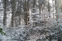 Pittsfield State Forest, Pittsfield, United States