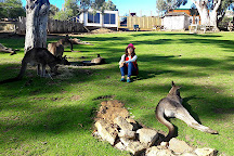 Bonorong Wildlife Sanctuary, Brighton, Australia