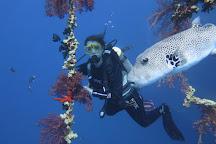 Aqaba International Dive Center, Aqaba, Jordan