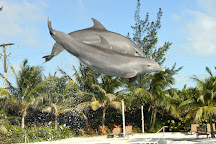 Dolphin Discovery Grand Cayman, West Bay, Cayman Islands
