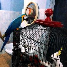 Birds Market lahore