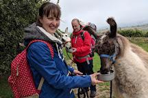 Peak Hill Llamas, Sidmouth, United Kingdom
