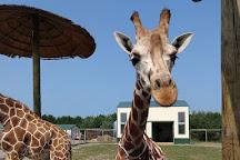 Safari North, Brainerd, United States