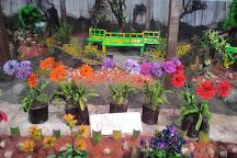 Thread Garden, Ooty (Udhagamandalam), India