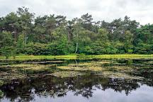 National park Dwingelderveld, Dwingeloo, The Netherlands