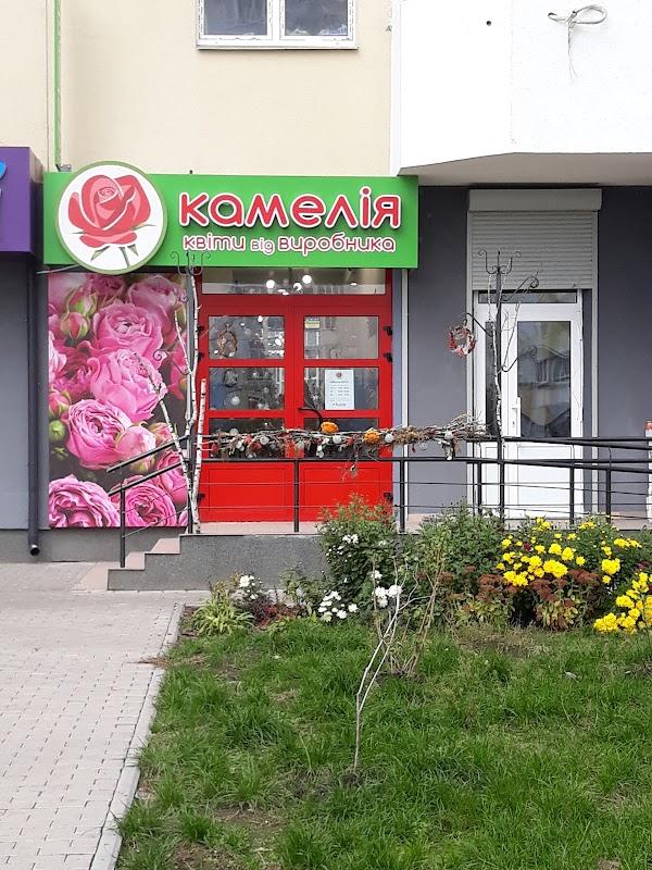 Цветы, камелия оптовый магазин цветов