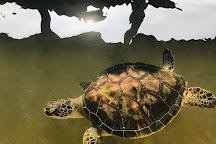 Sea Turtle Protection Association, Bentota, Sri Lanka