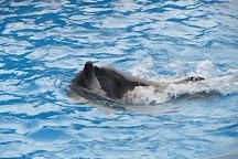 Dolphinarium, Batumi, Georgia