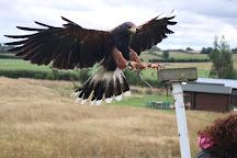 Bird on the Hand Falconry Experiences, Church Langton, United Kingdom