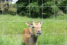 Doneraile Wildlife Park, Doneraile, Ireland