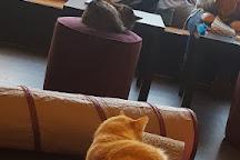 Pounce Cat Cafe, Charleston, United States