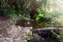 Westport Adventure Park, Westport, Ireland