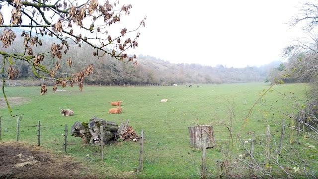 Reserve Naturelle de Boussiere