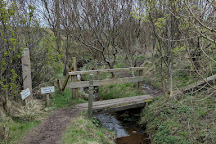 Olav's Wood, South Ronaldsay, United Kingdom
